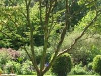 Gardens at Smedmore House