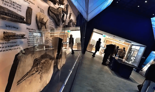 museum of jurassic marine life near smedmore house